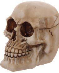 SK233_004 skull bookends 3