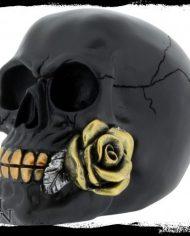 Black Rose From Dead