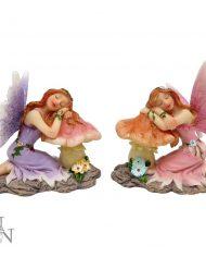 Delicate dreams fairies both